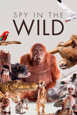 Spy in the Wild, 2017 - смотреть онлайн