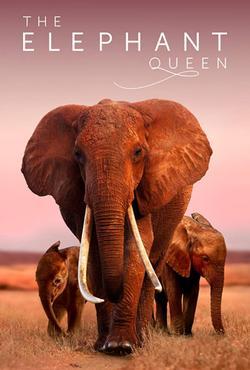 Королева слонов , 2018 - смотреть онлайн