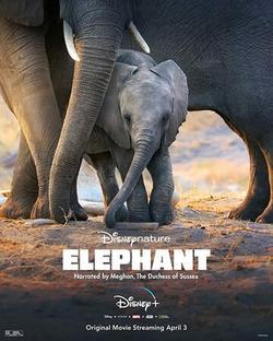 Слон , 2020 - смотреть онлайн