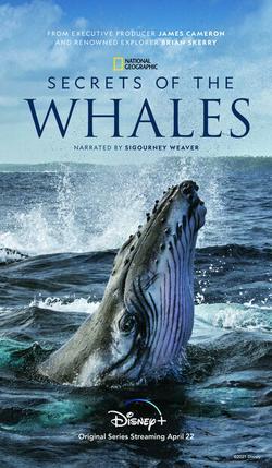 Тайны китов , 2021 - смотреть онлайн