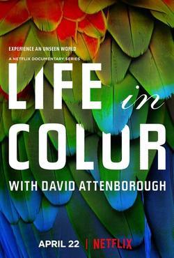 Жизнь в цвете с Дэвидом Аттенборо , 2021 - смотреть онлайн