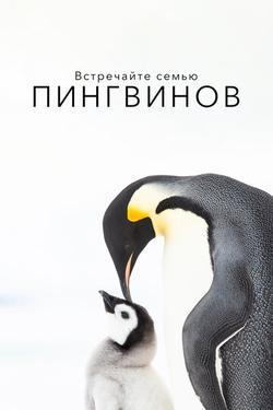 Встречайте семью пингвинов , 2020 - смотреть онлайн