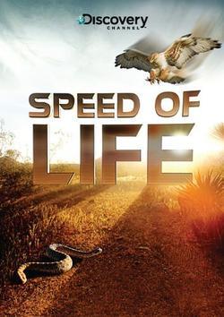 Discovery: Скорость жизни, 2010 - смотреть онлайн