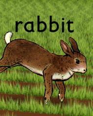 Кролик, 2005 - смотреть онлайн